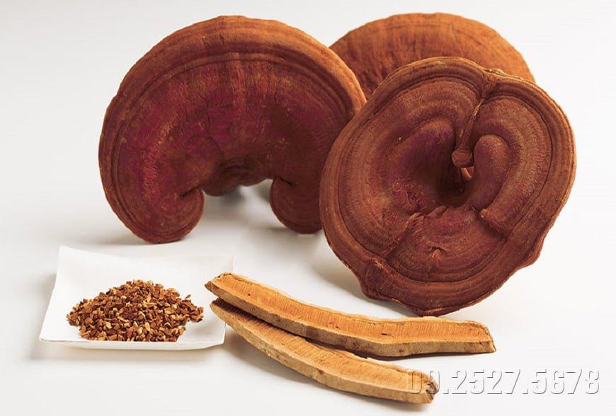 Một số quan điểm sai lầm về nấm linh chi